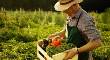 Biokisten – Obst und Gemüse für die ganze Familie